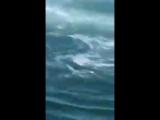 Большая белая акула украла добычу рыбака