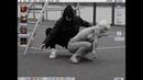 Пика ай я самурай Официальный клип
