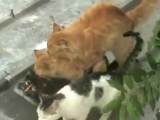 Групповые забавы похотливых котов _ Crazy Cats Group Sex ( 360 X 480 ).mp4