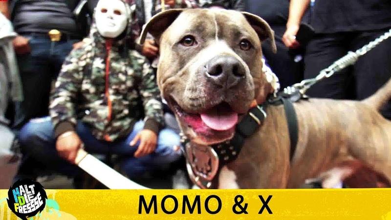 MOMO X - HALT DIE FRESSE 408 (OFFICIAL HD VERSION AGGROTV)