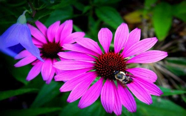 Самая великая бедность из всех — это отсутствие любви. Человек, который не развил способность любить, живет в своем личном аду. Человек, полный любви, находится в раю. Вы можете смотреть на человека как на замечательное и уникальное растение, которое спос