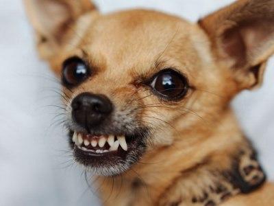 ультразвуковые отпугиватели собак