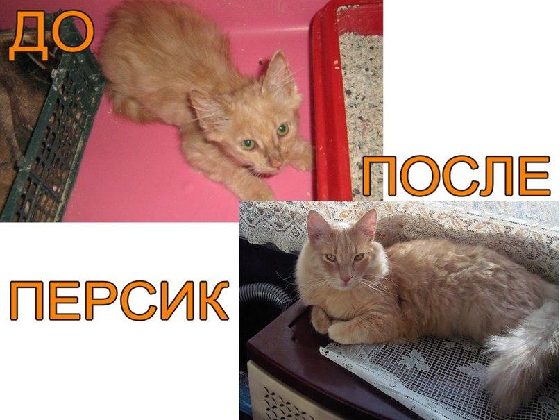 До и после. Персик