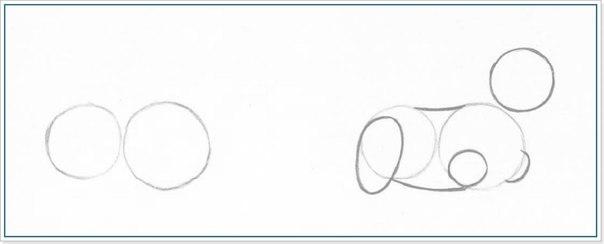 Как нарисовать йоркширского