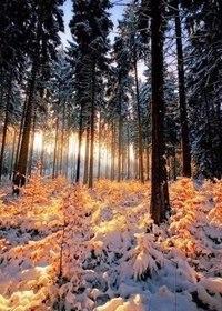 Зима... Морозная и снежная, для кого-то долгожданная, а кем-то не очень любимая, но бесспорно – прекрасная.  E7diP9F5I9I