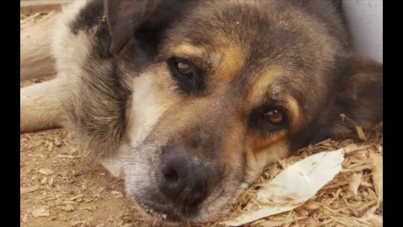 Янка Дягилева Про собаку