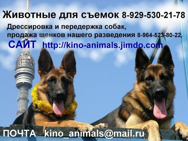 http://cs311525.vk.me/v311525031/5e6d/eOGPfGmMNu0.jpg