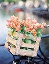 Не знаю, как вы, а я очень рада наступившей весне!