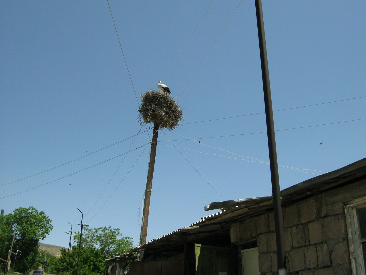 гнездо семьи аистов на столбе в селе в Армении