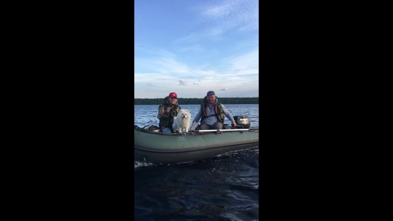 Трое в лодке вместе с собакой