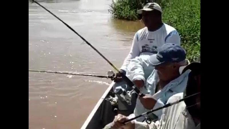 Крокодил,хотел рыбу.А получил по башке палкой