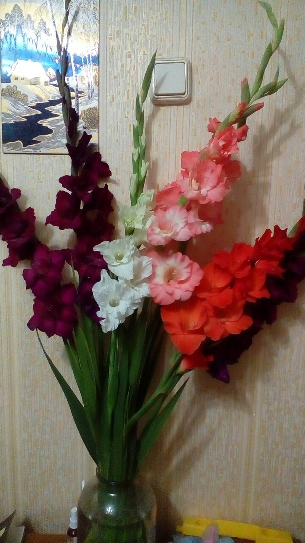 фотография из вКонтакта