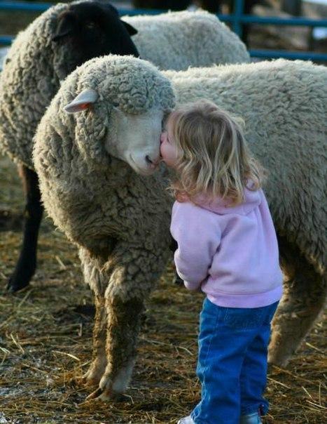Убийство и поедание животных происходит, главное, оттого, что людей уверили в том, что животные предназначены Богом на пользование людям и что нет ничего дурного в убийстве животных.