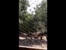 Сафари парк. Геленджик