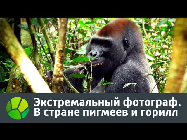 Экстремальный фотограф. В стране пигмеев и горилл (2016)
