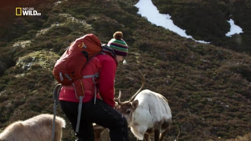 NG Дикая природа Шотландии. Жители высокогорья - Wild Scotland. Highlanders (2016)