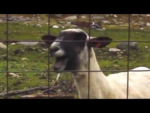 PSY - GENTLEMAN GoatStep(Baran Remix)
