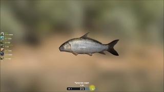 Чукучан карп, открытие водоема Канал Уилкинсон в игре Трофейная рыбалка 2