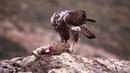 Birding en la Comunitat Valenciana