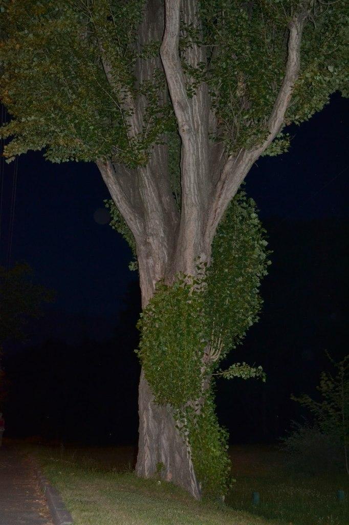Елена Руденко. Киев. Голосеевский район. Лето 2014 г.  E4MGRpGTg0k
