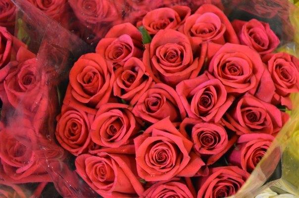 Большие скидки 25 роз всего лишь за
