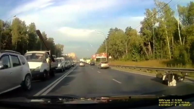 Лось сбил мотоциклиста в Москве