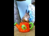 ?️  Baby Squirrel Alexandra  ?️
