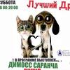 Благотворительный концерт-выставка Лучший друг