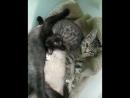Срочно котята ищут дом!