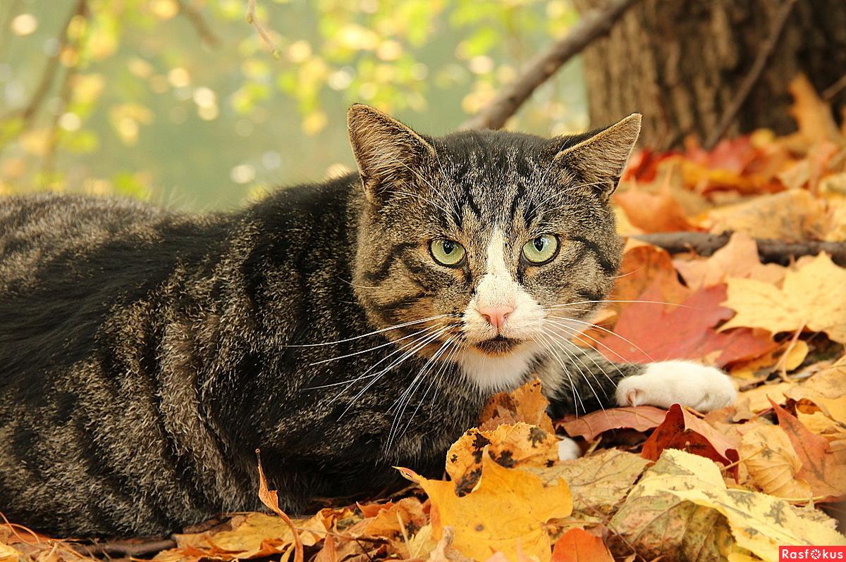 Хозяин! Ну не люблю я гулять! И осень не люблю! Домой хочу.