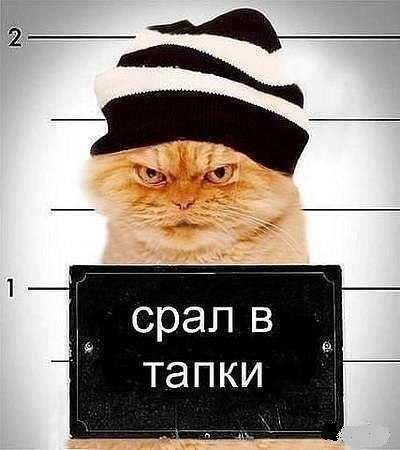 Игорь Цветков | Санкт-Петербург