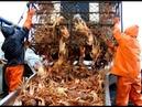 Săn cua hoàng đế Fishing King Crab