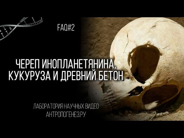 Александр Соколов. Череп инопланетянина, кукуруза и древний бетон