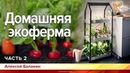 Домашняя экоферма Алексей Балакин Часть 2