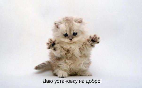 Какой наполнитель лучше для кота Харьков?