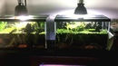 Our Fish Room update 15.01.2017