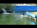 MVI 0693 Жизнь других Первое купание
