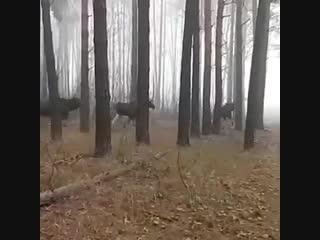 Охота была на кабана🐗🐗🐗, а вышли вот такие вот красавцы 🦌🦌🦌🤷♂️