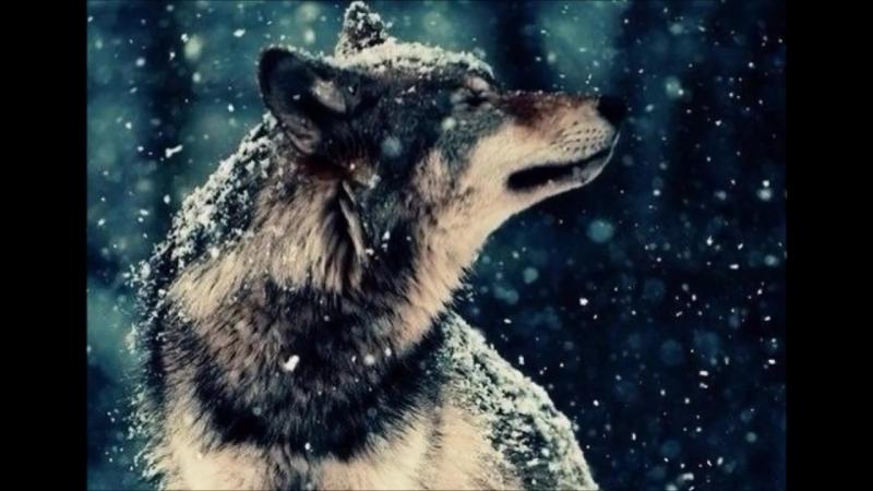 Т Тишинская Волчица mp4