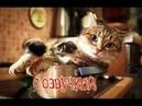 Приколы с котами – СМЕШНАЯ ОЗВУЧКА ЖИВОТНЫХ от DOMI SHOW – Попробуй не засмеяться