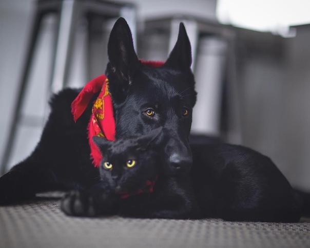 """У знакомой была кошка. Безымянная, потому что приходила только на слово """"мясо"""". Больше всего это мелкое чёрно-белое создание любило сесть горгульюшкой на мебель  и ненавидеть. На руки не шло, разве что к кому-то из гостей, глядя в процессе на хозяйку и ка"""