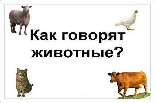 Фото №456256025 со страницы Кати Бражниковой