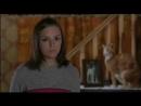 Blow Dry|Английский цирюльник