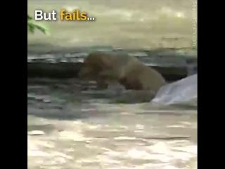 спасение тонущего щенка