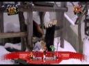 Смішні приколи про тварин Вусо-лапо-хвіст 1