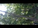 Сруб деревьев на участке