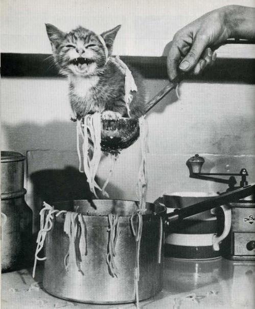Кошачий юмор - Страница 2 1iaDi_NYpcs