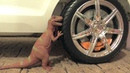 Crushing Toy Cars Soft Things by Car with Baby! Dinosaur, Squishy, Cars and More!