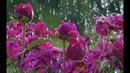 Дождь Frank Duval🎼🎵🎹 Красивая музыка