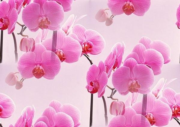 Цветочные и растительные фоны - Страница 3 Tj_8rNml3ds